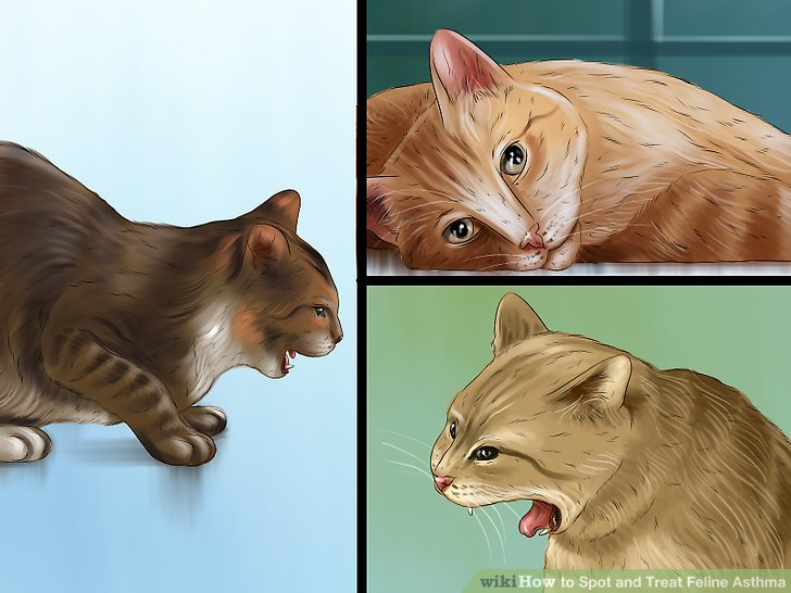 Asthma in Cats