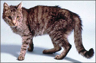 Hyperthryoidism In Cats - Diagnosis And Treatment Options