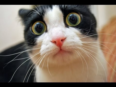 Image result for cat scared