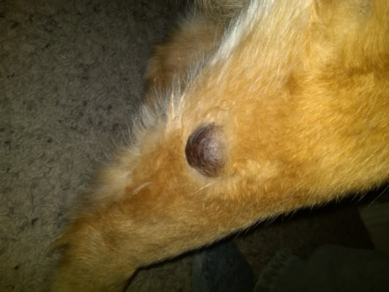 Tumor On A Dog S Elbow