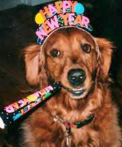 Dogs New Year
