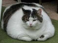 Tips and Tricks to get weight off your obese pet