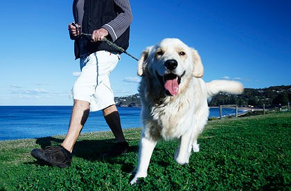 Daily walks are beneficial for your dog physically and mentally