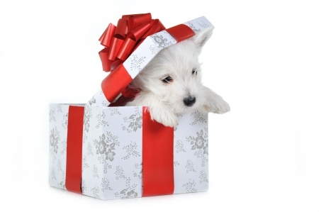 Pets Are Not Wise Holiday Gifts!
