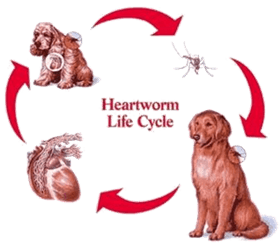 Heartworm Prevention Dogs