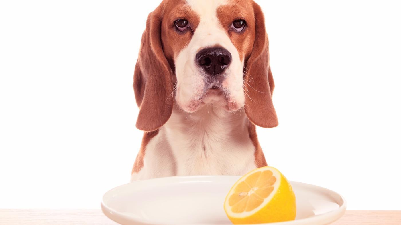 Should you give your dog Vitamin C?