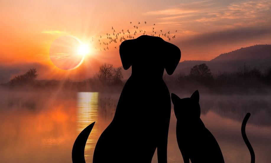 How To Keep Your Dog And Cat Safe During The Solar Eclipse