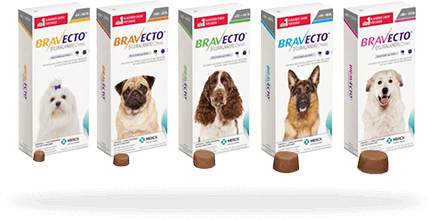 Bravecto is both effective and very safe for prevention of fleas and ticks in dogs and cats.