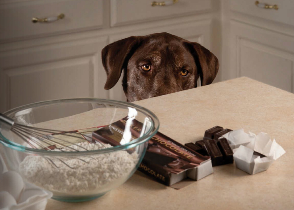 Chocolate Can Be Seriously Toxic To Dogs