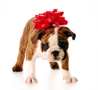 Purchasing Adopting a Puppy This Holiday Season