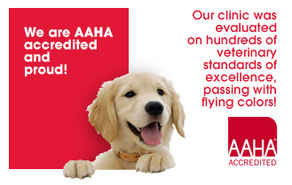 AAHA Accreditation Proves a Veterinary Clinic's Voluntary Pursuit of Excellence