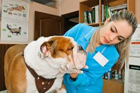 The Routine Yearly Veterinary Well Visit