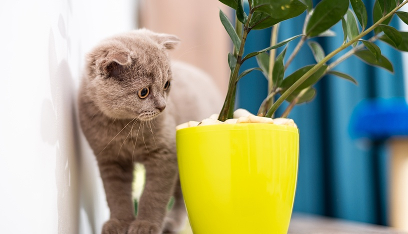 Common Household Poisons Cats