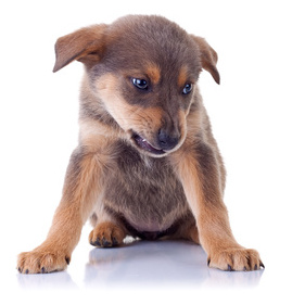 Recognizing aggression in puppies