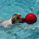 Bernie playing in the pool