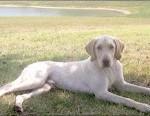 Romeo the dog