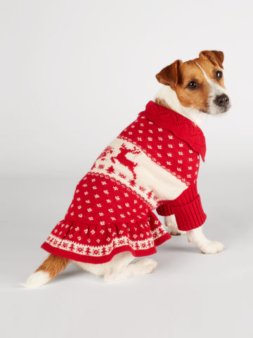 Dog in Holiday Sweater