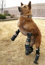 Naki'o Dog
