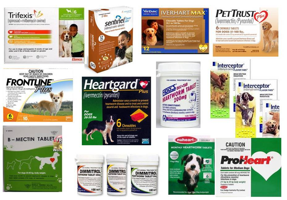 Heatworm Prevention Products For Dogs