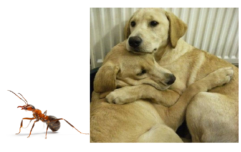 pet-safe-insect-killers