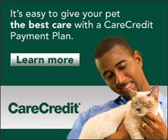 Care Credit Veterinary Medical Payment Plans
