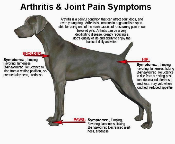 Glucosamine and Glycosaminoglycan injections for relief of arthritis pain in dogs and cats