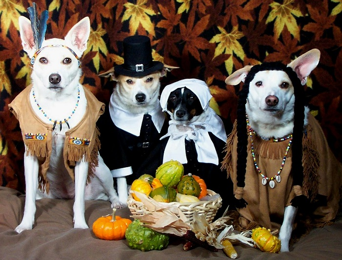 Keep Thanksgiving Enjoyable For Your Dog