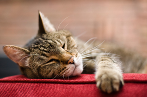 Ways To Help Your Senior Cat At Home