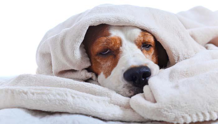 Florida Canine Influenza Outbreak