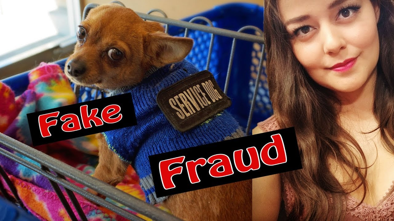 Fake Service Dogs Shameful And Illegal