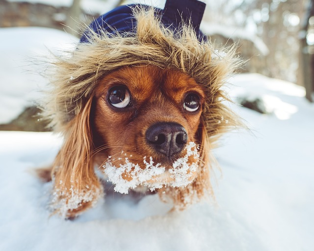 Winter Health Tips for Your Senior Pet
