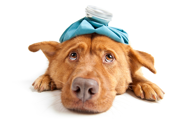 Canine Influenza - Should We Be Vaccinating With No Outbreak