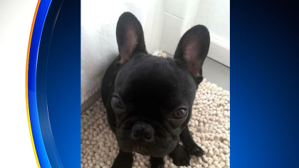 Puppy Dies After United Airlined Fligtht Attendant Forces Owner To Put Pet Carrier In Overhead Bin