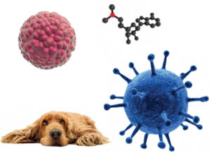 Veterinary Stem Cell Therapy For Chronic DIsease In Dogs And Cats
