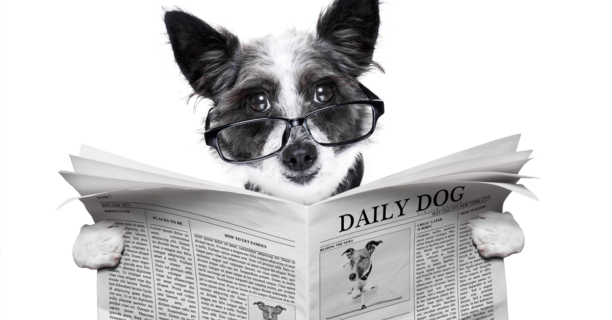 Subscribe To The Web-DVM Newsletter